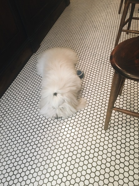 A fluffy friends blends in with the gorgeous tiles